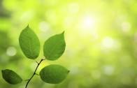 Por-donde-respiran-las-plantas[1]
