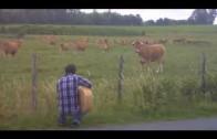 Phènomène étrange et drole vache et guitare