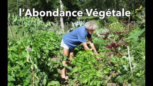l'Abondance Végétale (selon Philip Forrer) – culture sur buttes
